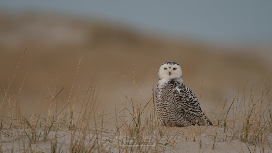 Looking for the Owl by Scott King